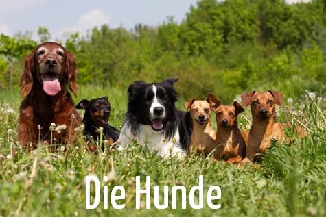 Hunde_schrift
