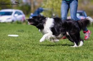 Frisbee, 19.4.15