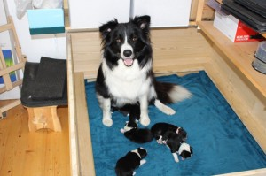 Lia and her 6 puppies