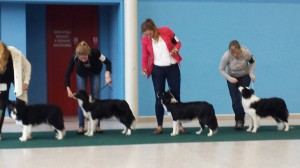 females of puppy class
