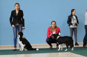Lily and Cloe with their owners
