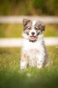 Eywa x Xandro puppy
