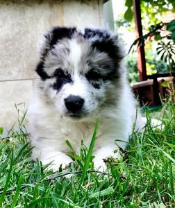 Enid x Xandro puppy