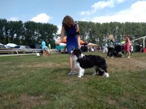 Eywa x Xandro puppy, HD A, ED 0/0, OCD-free, free of spondylosis