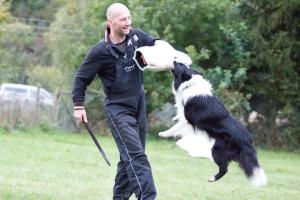 All Or Nothing Quick Dash, black-white stud dog, HD-A, ED-free, OCD-free, Spondylosa-free, in defense training
