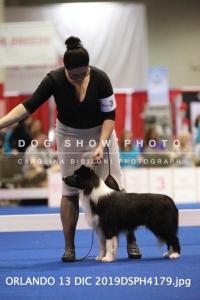 De Stijl's A Boy's Best Friend at Nationals, black male living in the US, HD good, ED-free, full scissor bite, American Champion, stud dog to be